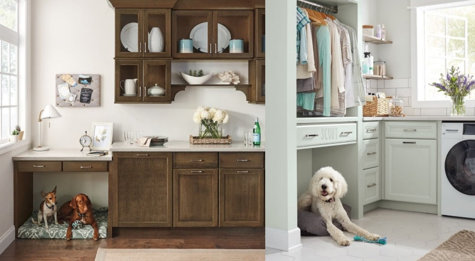 Dog Bed placement and areas in the home