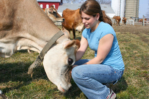 Casco Bay Creamery Supports Family Dairy Farms