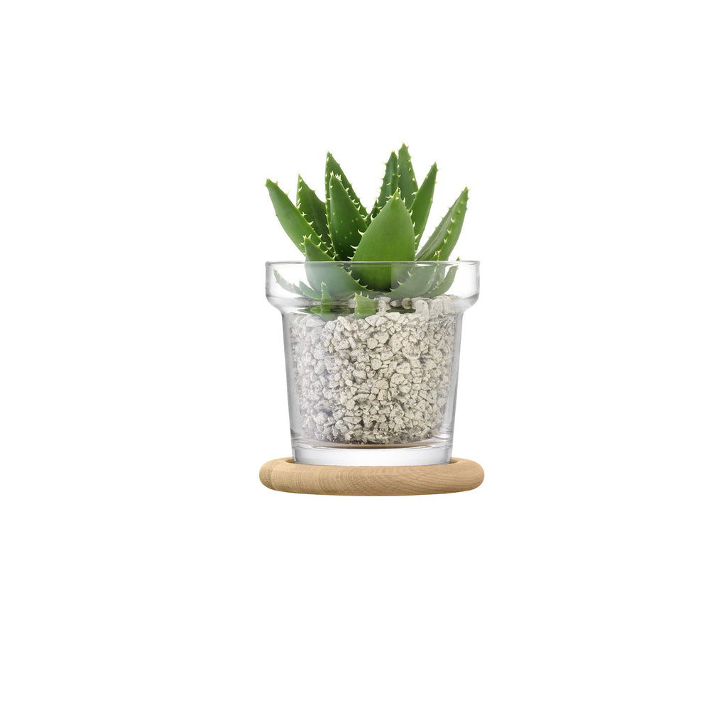 Planted Plant Pot & Oak Base 16.5 cm