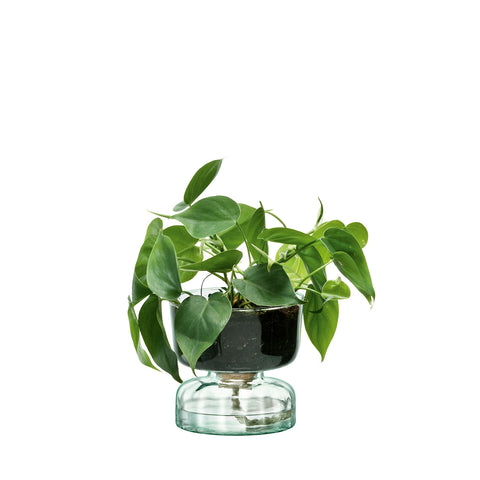 Glass Plant Funnel Pot 24cm