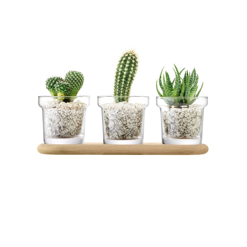 Trio Plant Pot Set & Oak Base 11.5cm