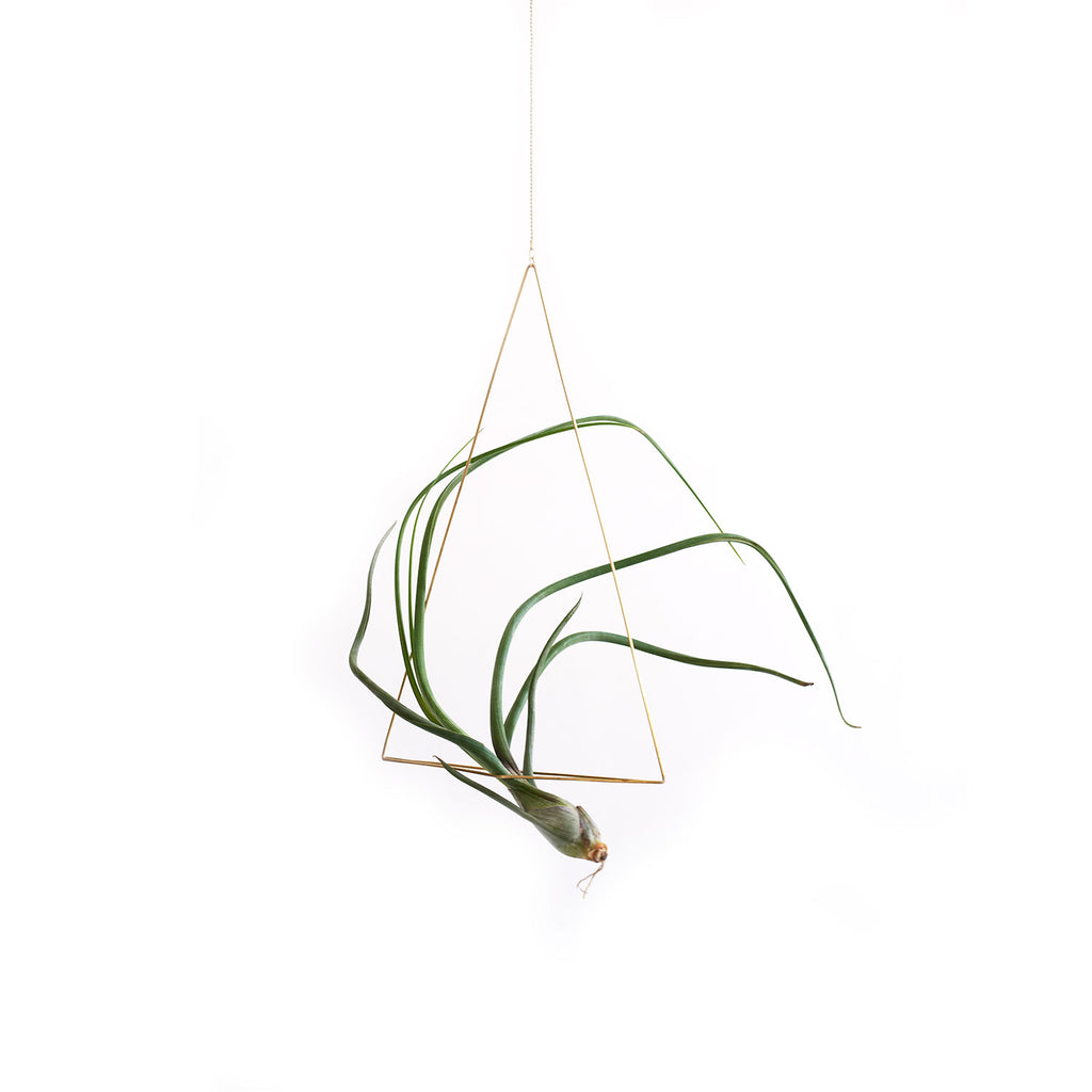 Triangle Air Plant & Stand