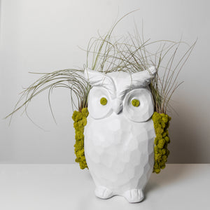 Owl Art Collection