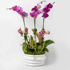 Sympathetic Orchid Arrangement