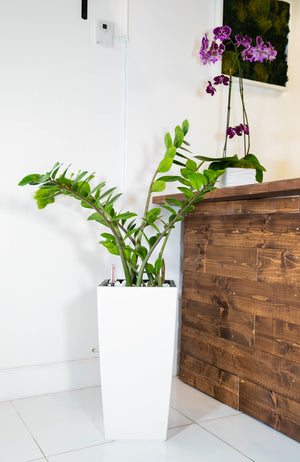 Plants - Elegant Planter