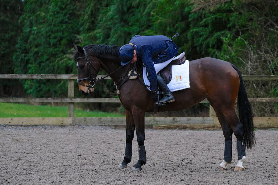 Which XC boots are best for my horse?
