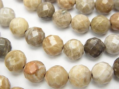 Fossil Coral  64Faceted Round 8mm half or 1strand (aprx.15inch/38cm)