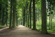 Guided Tour - Sonian Forest - Belgium
