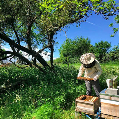 Beekeeping Workshops - Somerset