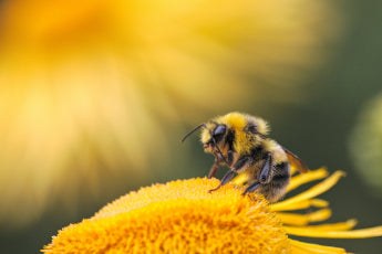 WHAT'S KILLING OUR BEES?