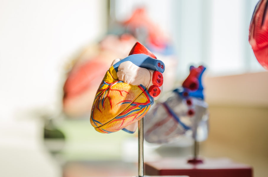 Atrial Fibrillation - The Nutrition and Lifestyle Connection
