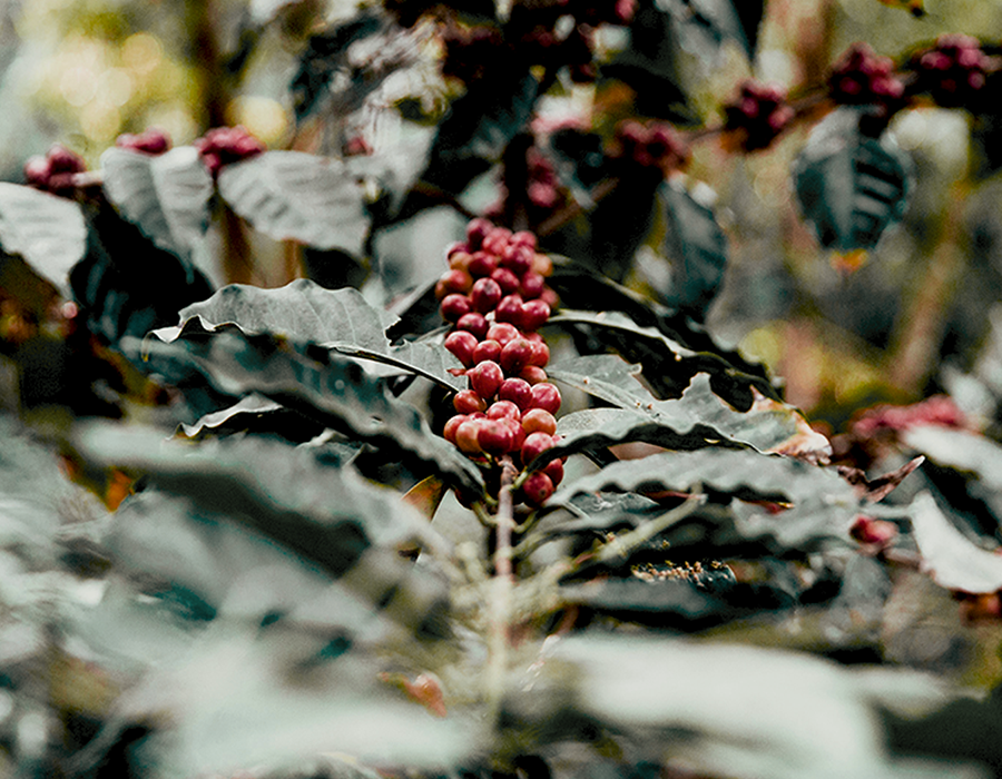 Why Sustainability Matters in Coffee
