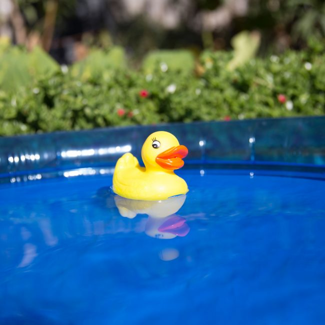PLaygro rubber duckie floating on the water pool