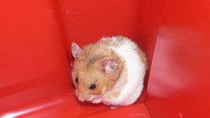 15 Great Fun Facts About Hamsters Ideas You Can Share With Your Friends