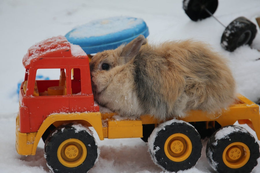 Reasons Why Russian Dwarf Hamster Toys Is Getting More Popular In The Past Decade