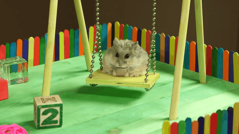 Effortless Dwarf Hamster Care Tips For a More Peaceful Life