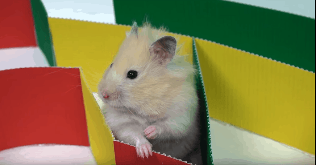 In-depth Hamster Ultimate Guide Every Novice Needs