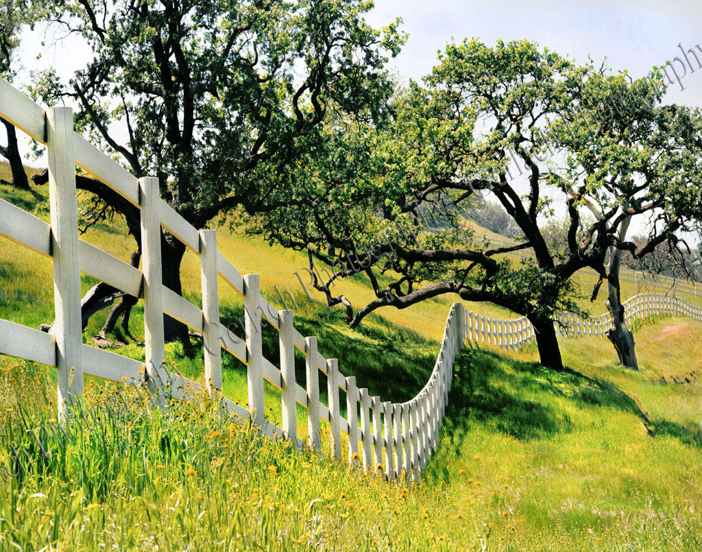 Santa Ynez Valley Fence