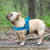 Soft No Pull Dog Harness
