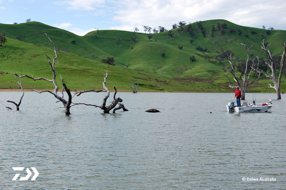 Persistence for Murray Cod 03