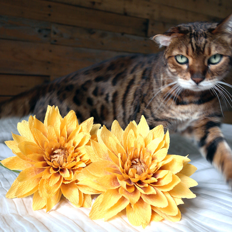 Keeping Your Pets Safe At Home When Bringing In Fresh Flowers