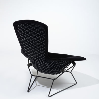 Knoll Bertoia Bird Lounge Chair Jet Black 9005