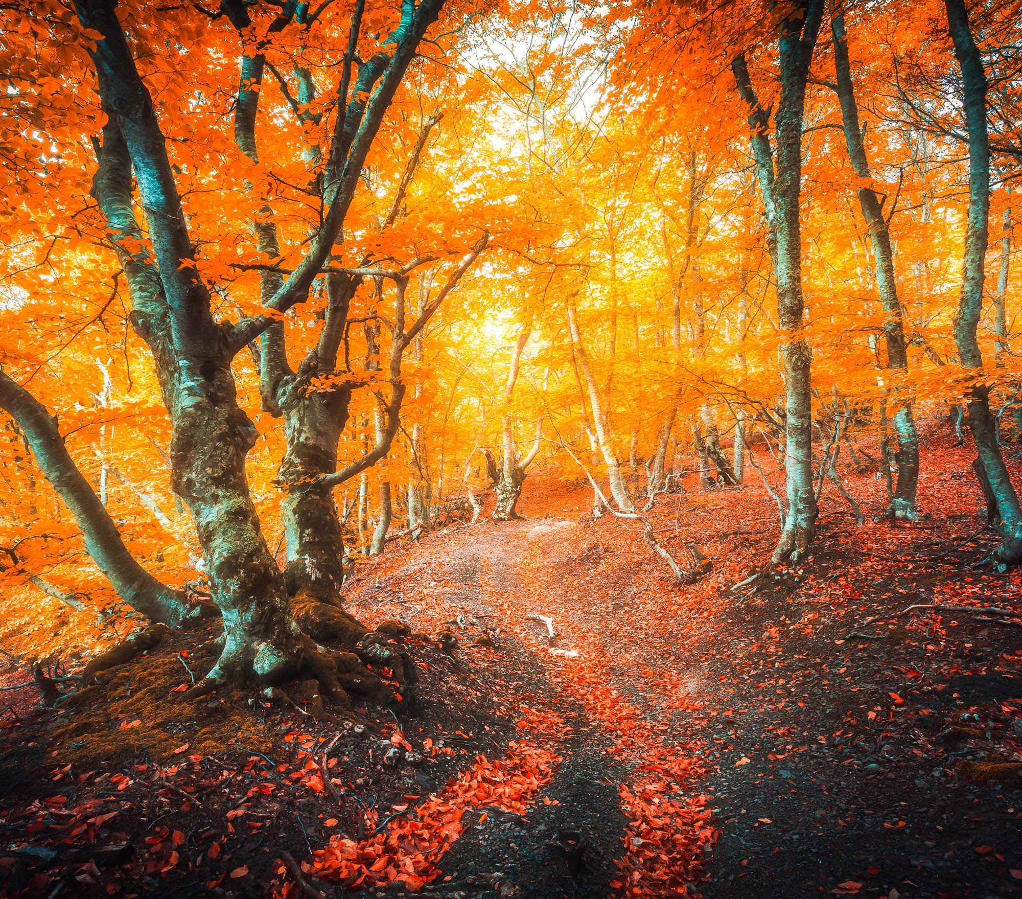 Fall Lightroom Preset - Bright and Vibrant