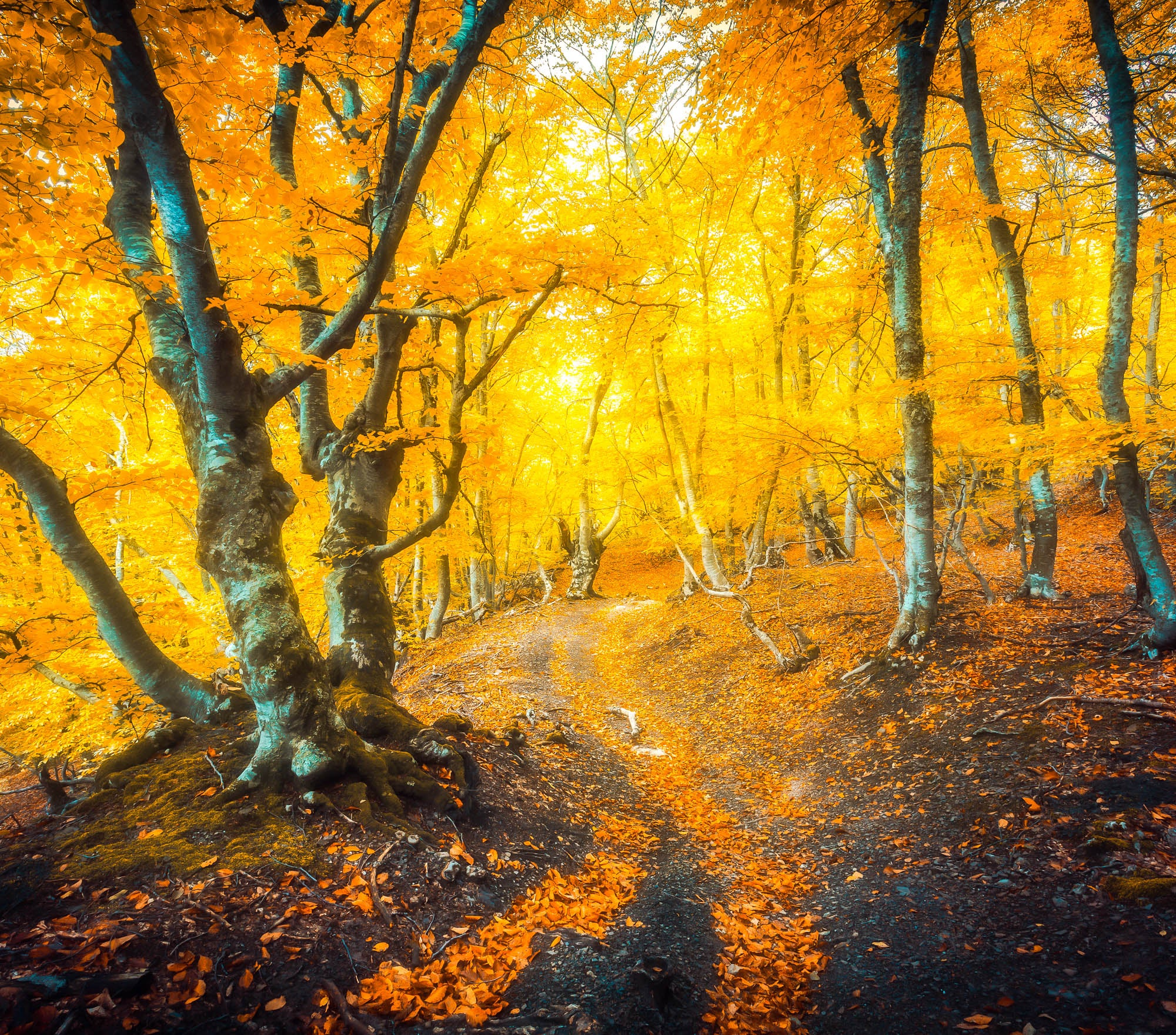 Fall Lightroom Preset - Golden Deep