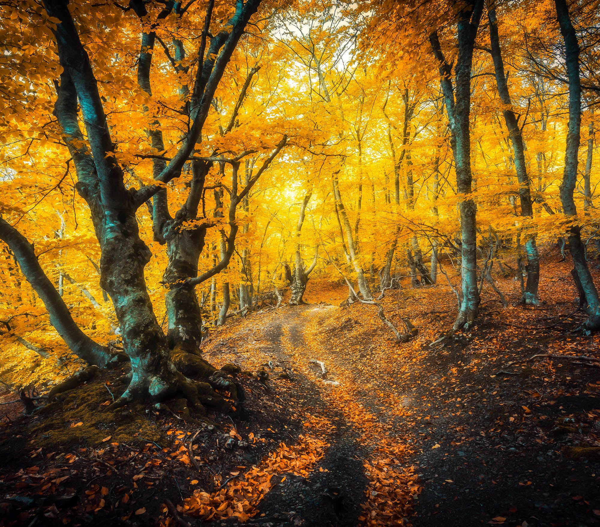 Fall Lightroom Preset - Golden Moody High Contrast