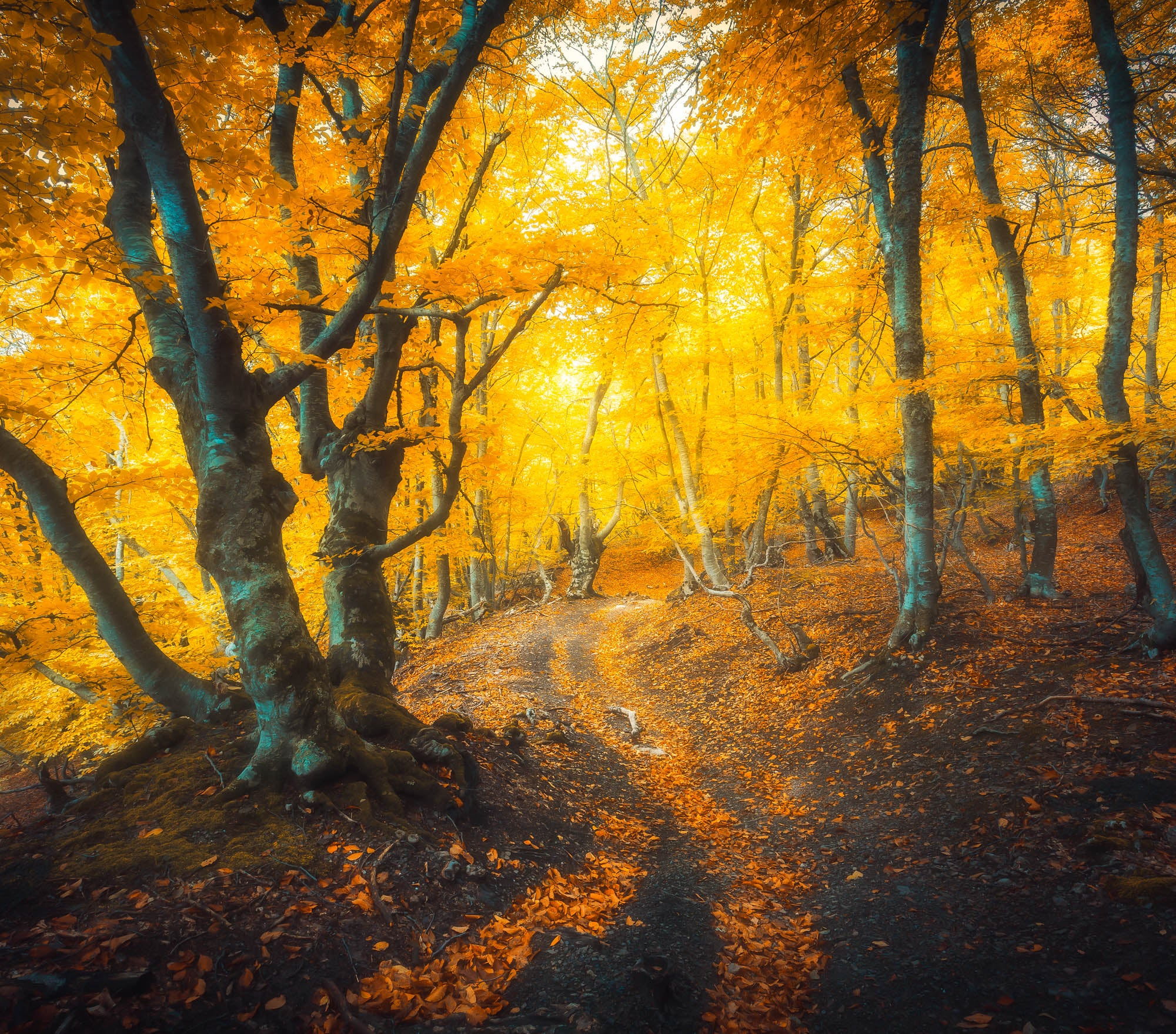 Fall Lightroom Preset - Golden Soft