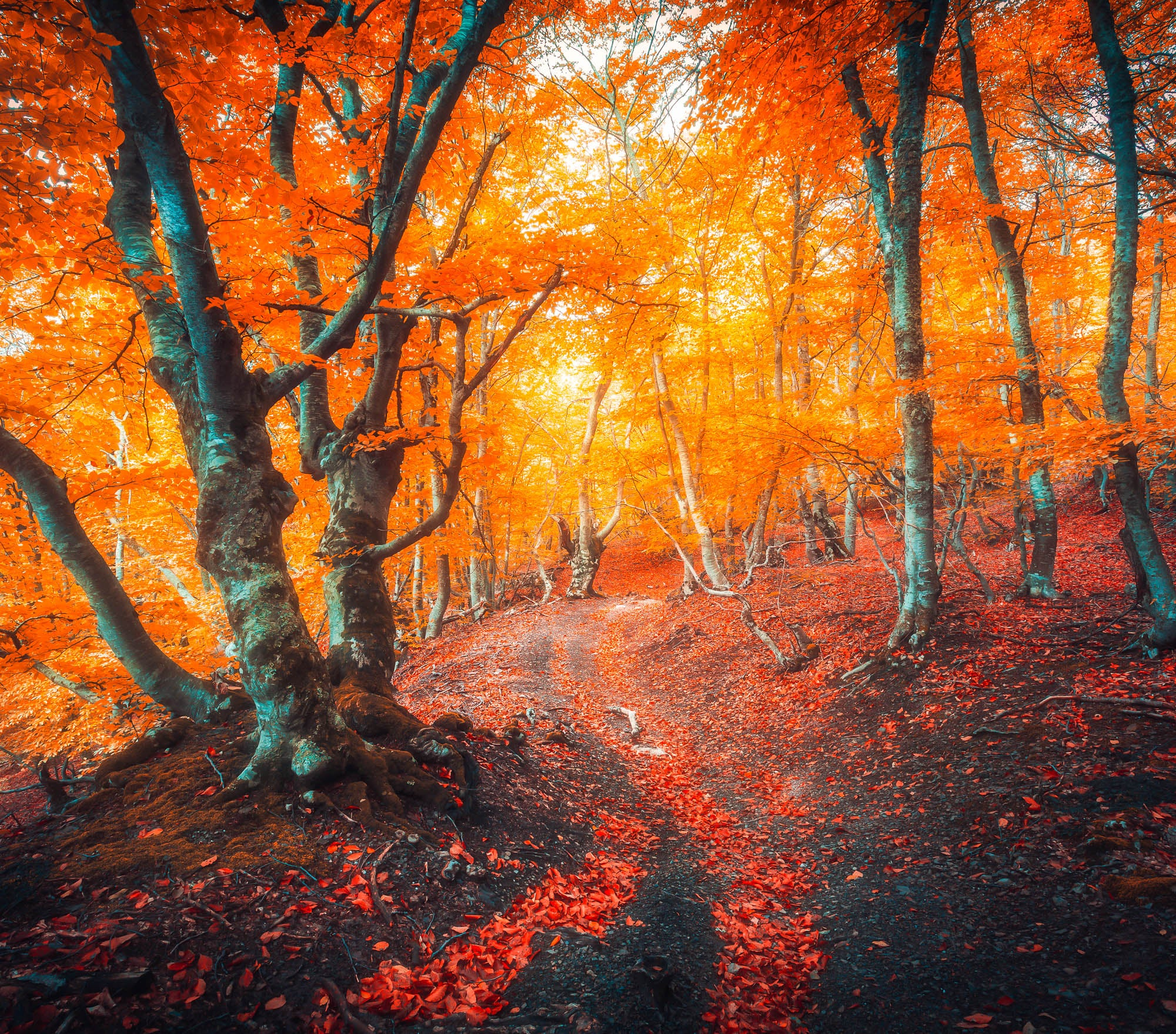Fall Lightroom Preset - Orange Deep Bright