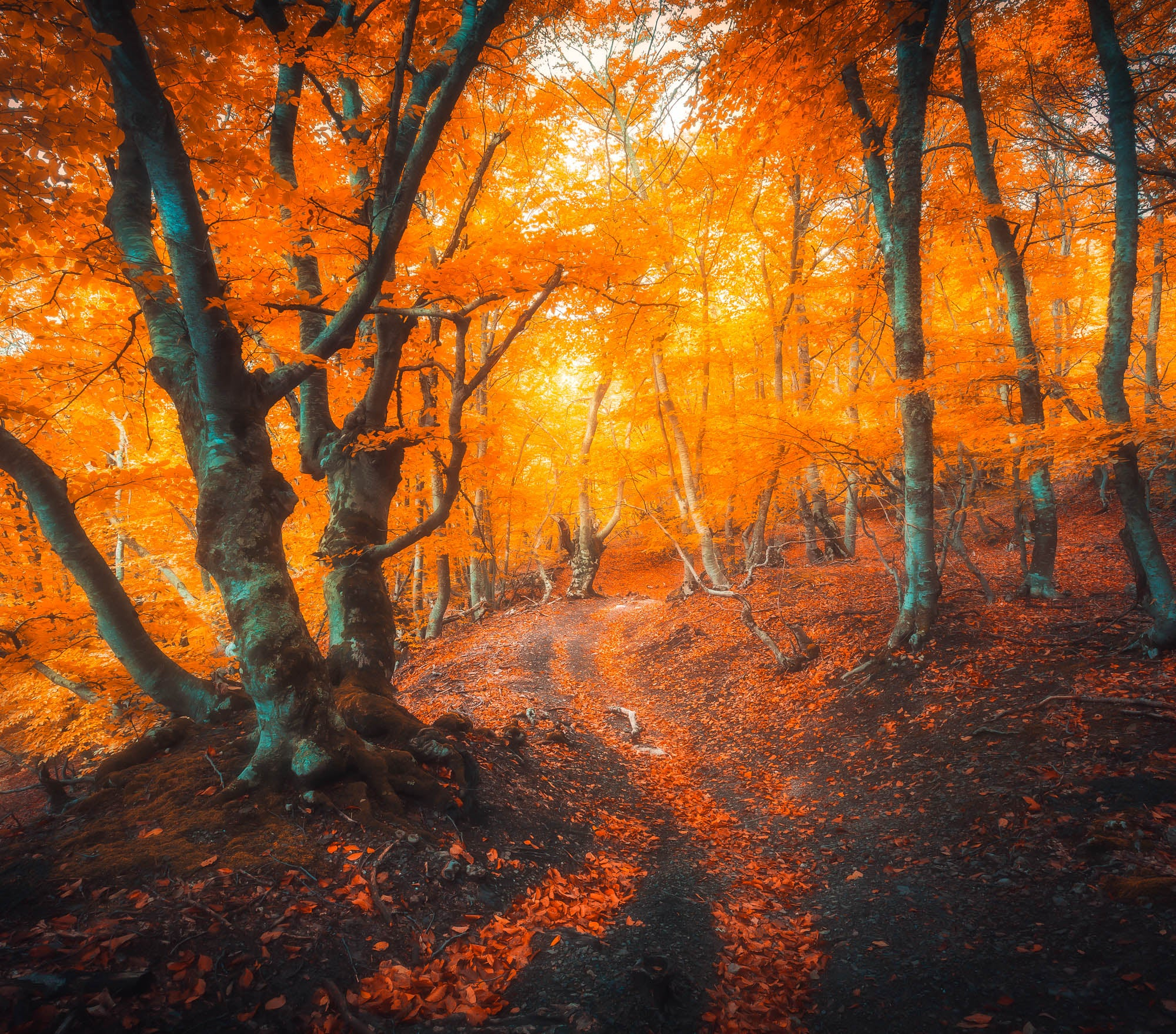 Fall Lightroom Preset - Orange Soft and Dreamy