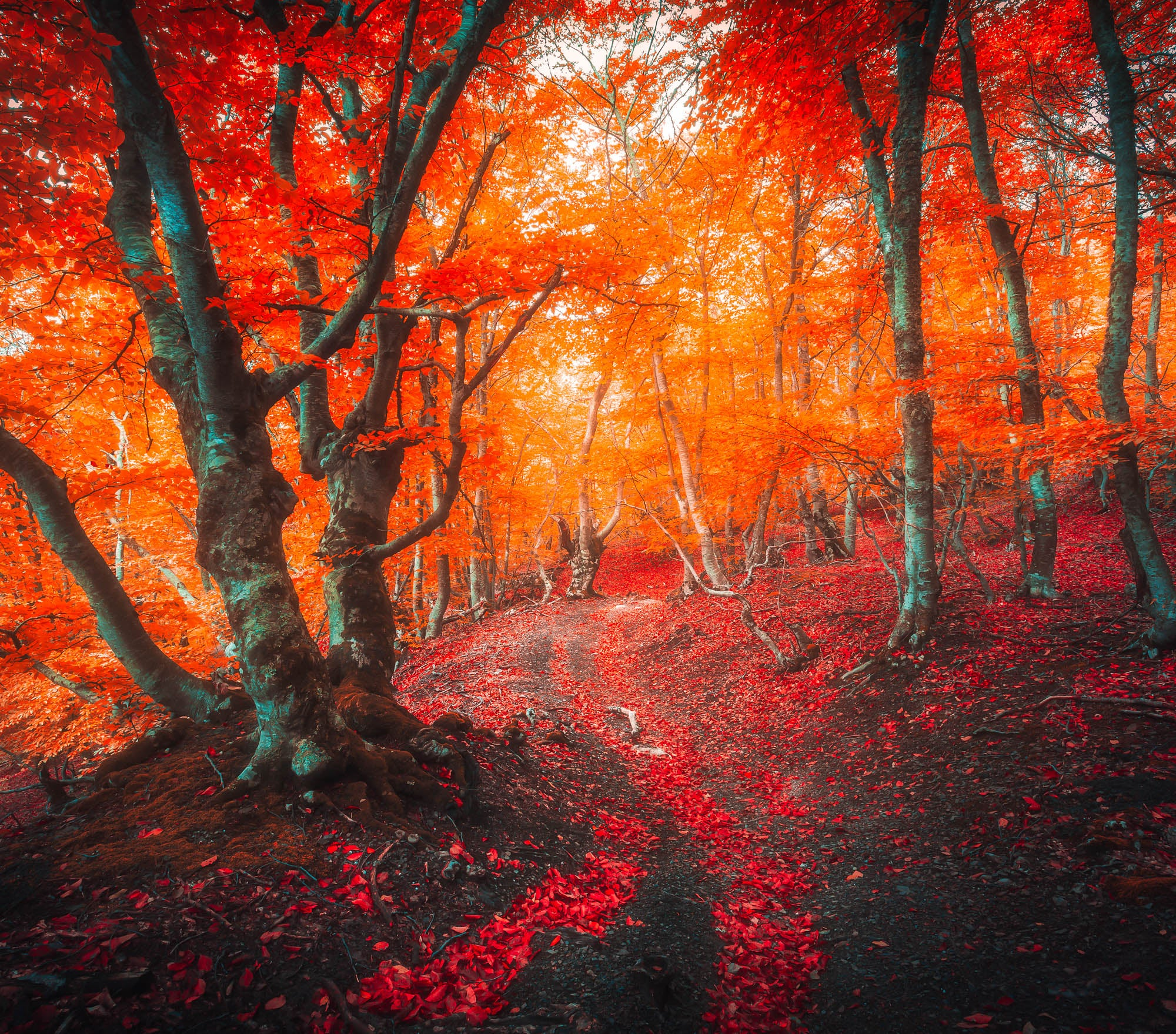 Fall Lightroom Preset - Red Color Intense