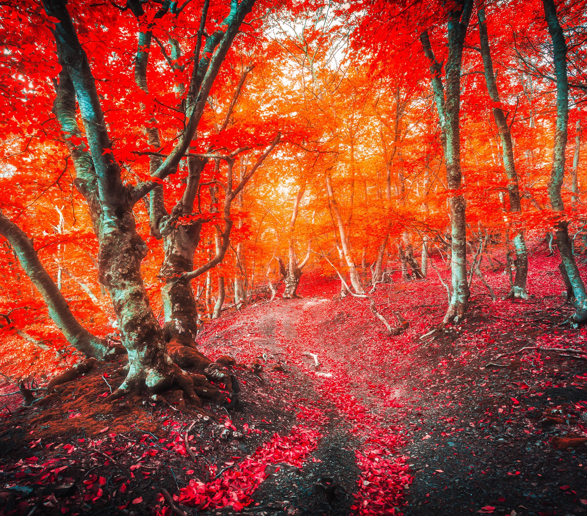Fall Lightroom Preset - Red Color Intense Bright