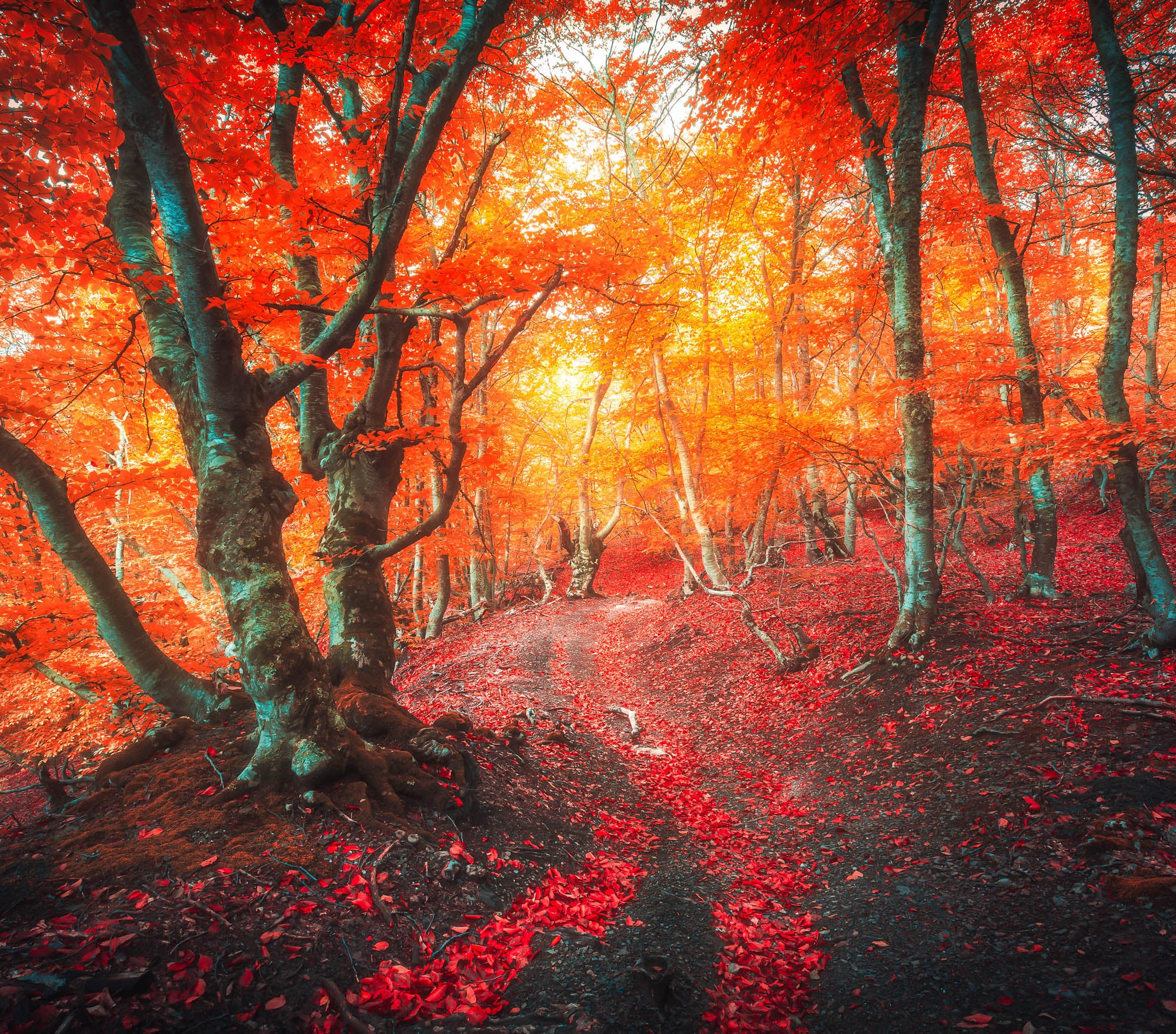 Fall Lightroom Preset - Red Color Light