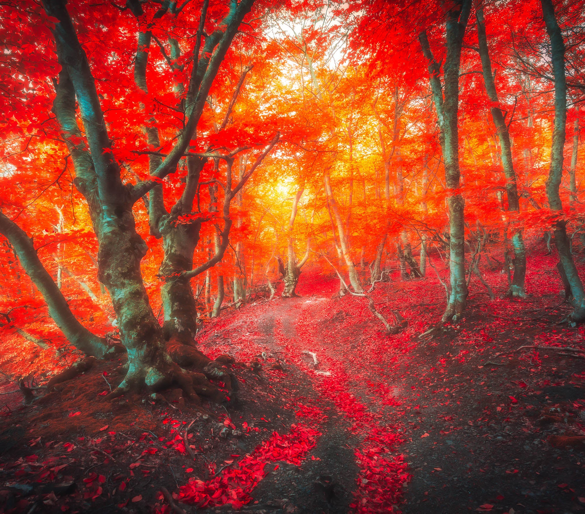 Fall Lightroom Preset - Red Color Soft and Dreamy