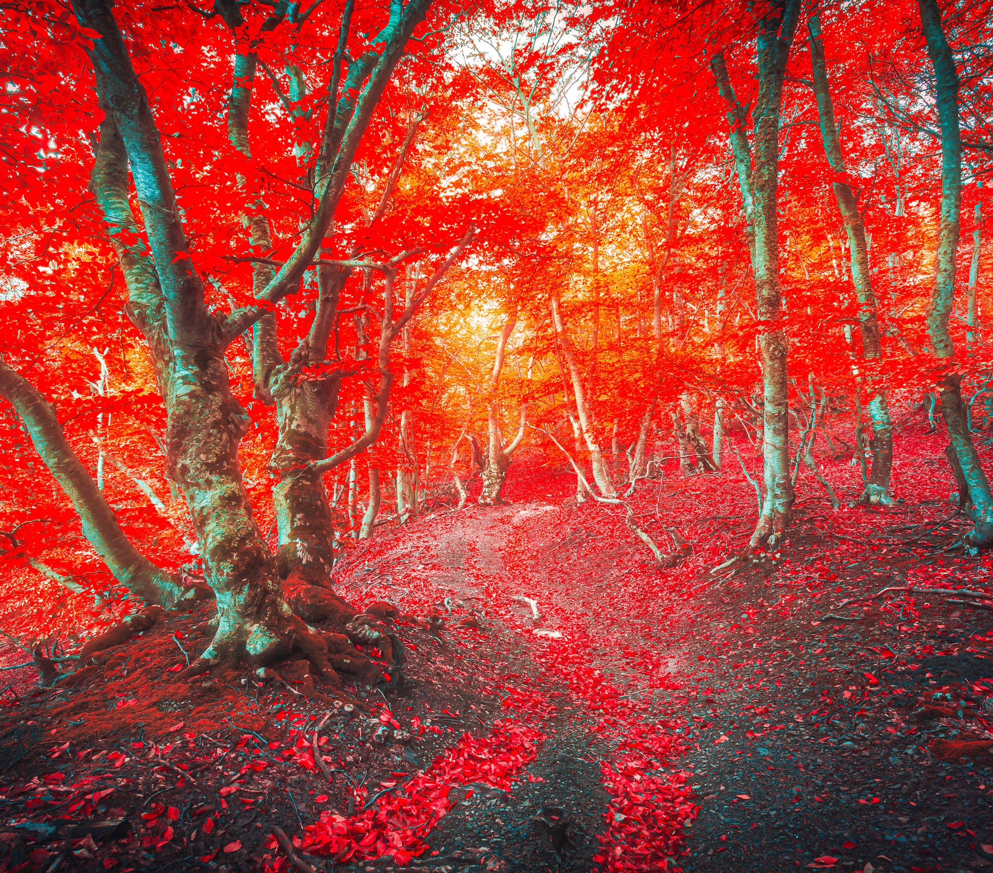 Fall Lightroom Preset - Red Color Super Intense