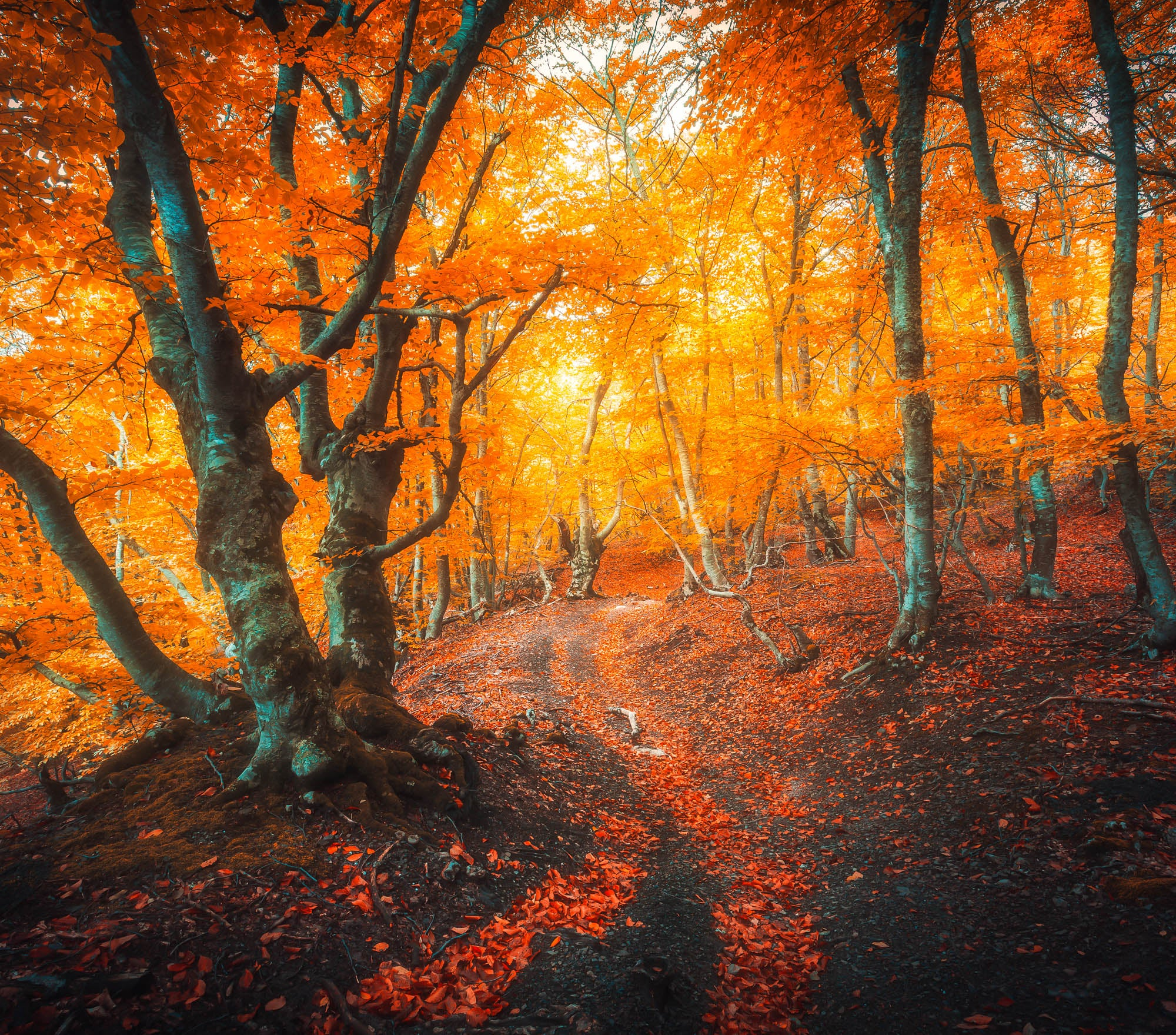 Fall Lightroom Preset - Vibrant