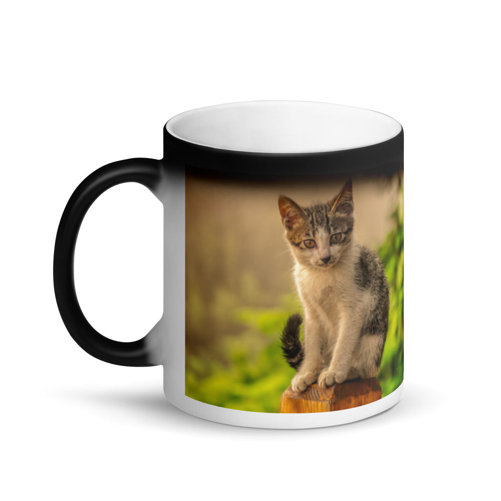 Surprise Black Mug - The Cat Collection - The Penetrating Look