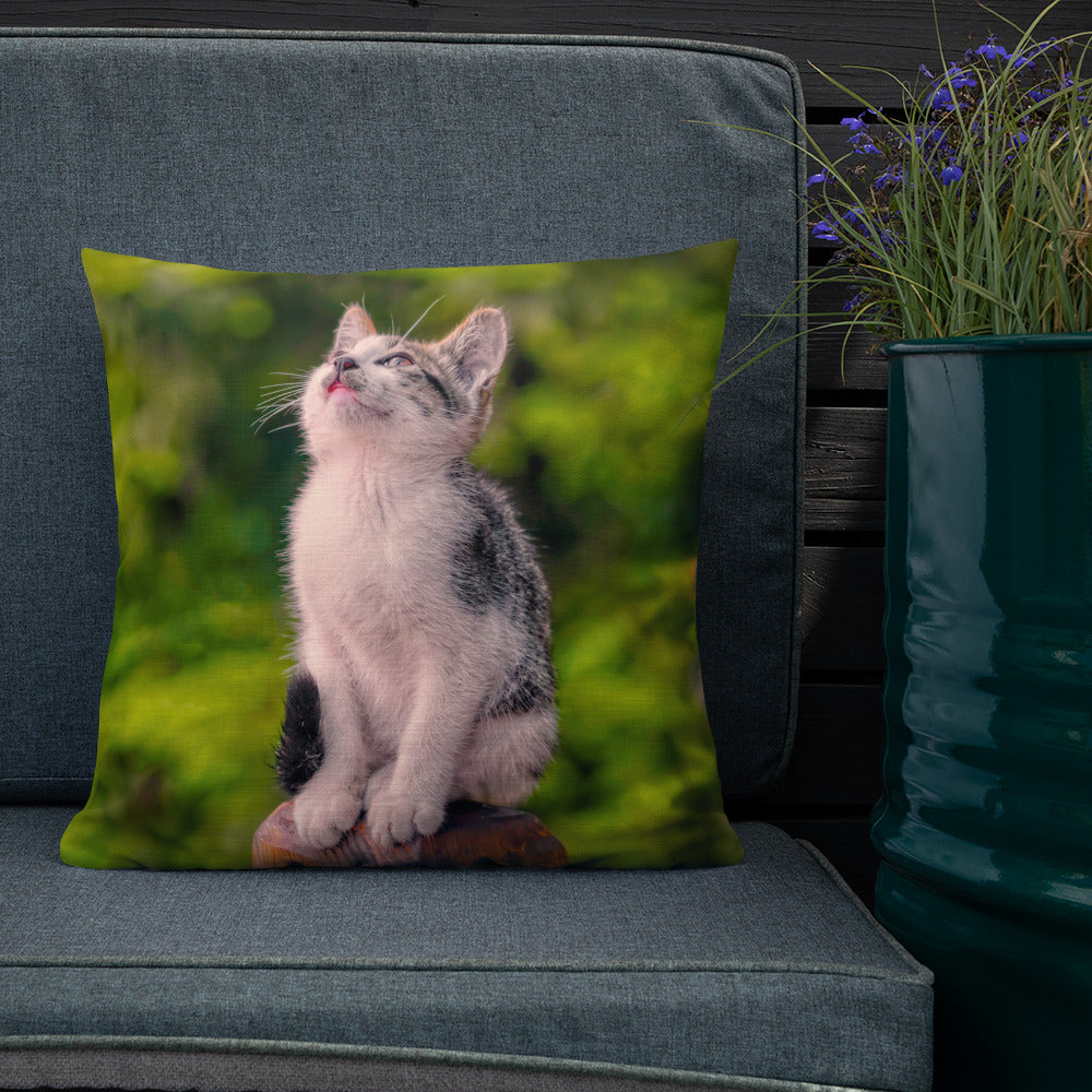 Decorative Throw Pillows - Cat Collection - The Dreamy Look