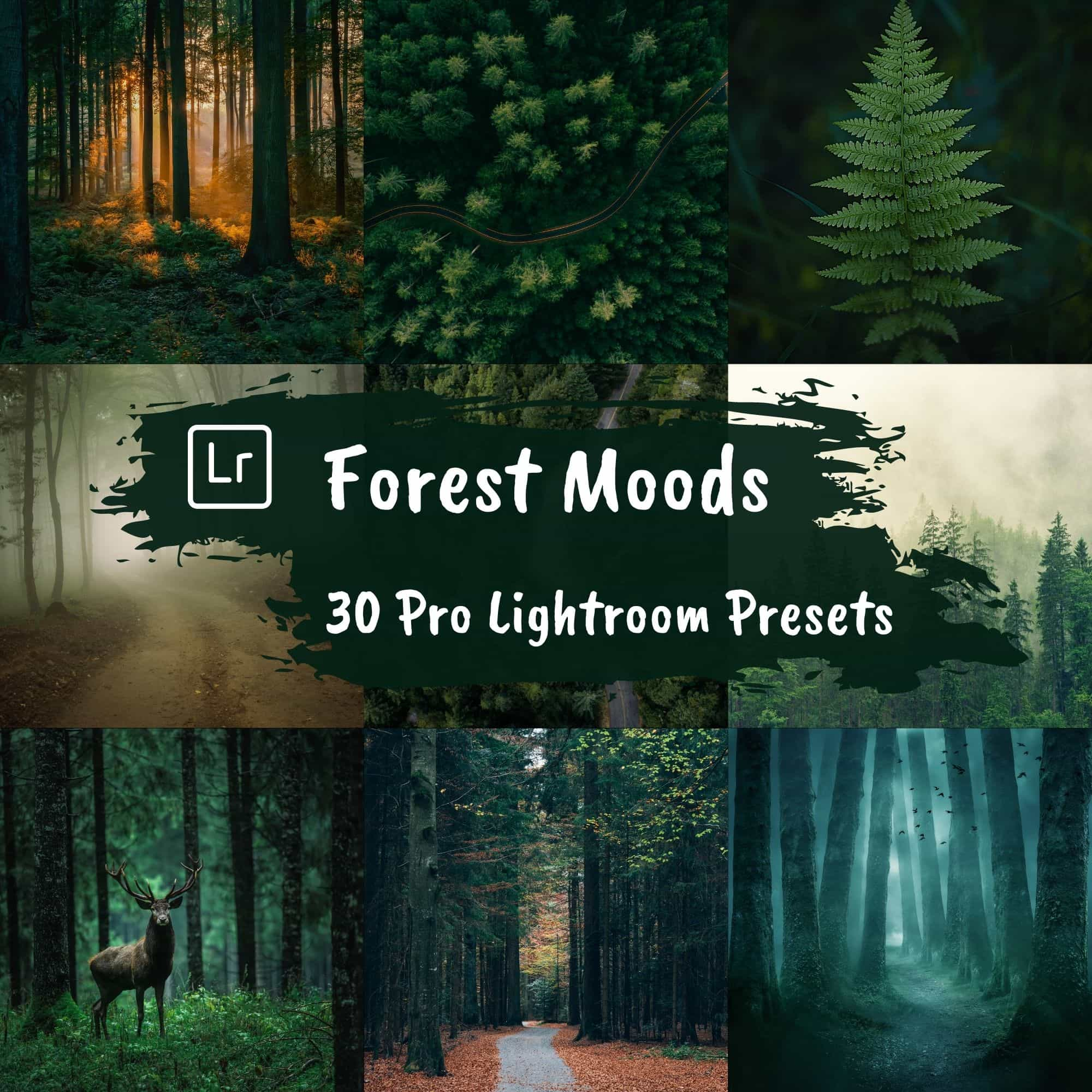 Dark and Moody Lightroom Presets Landscape Forest