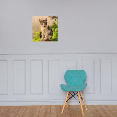 Poster Cat Lover Collection - The Intense Look