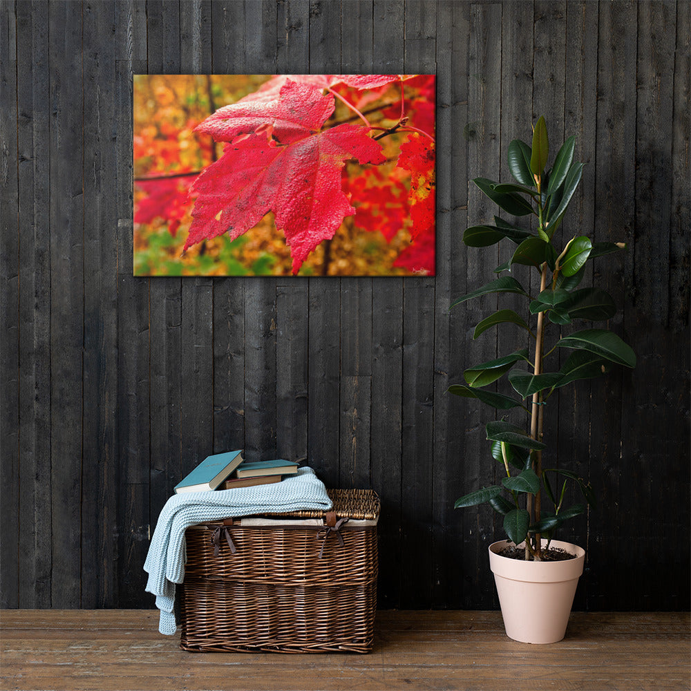 Autumn Red Leave  - Premium Wall Art Canvas Print