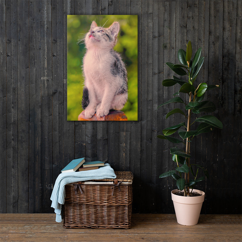 Wall Canvas Cat Lover Collection - The Dreamy Look PORTRAIT Sizes