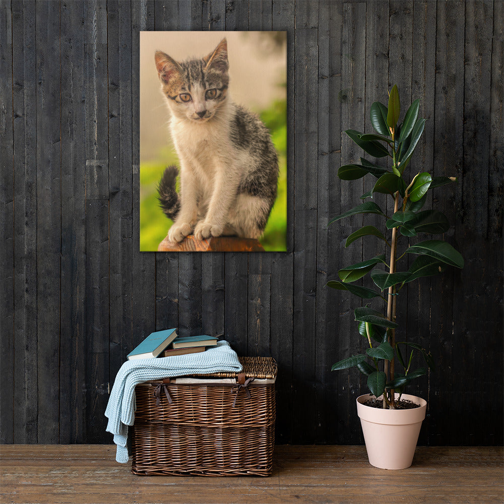 Wall Canvas Cat Lover Collection - The Intense Look PORTRAIT Sizes