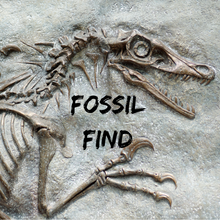 Load image into Gallery viewer, FOSSIL FIND