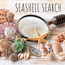 Load image into Gallery viewer, SEASHELL SEARCH