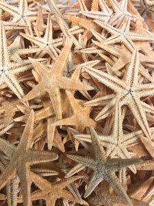 TAN FLAT STARFISH
