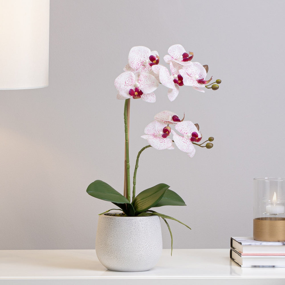 Load image into Gallery viewer, Phalaenopsis Double Orchid - Pink