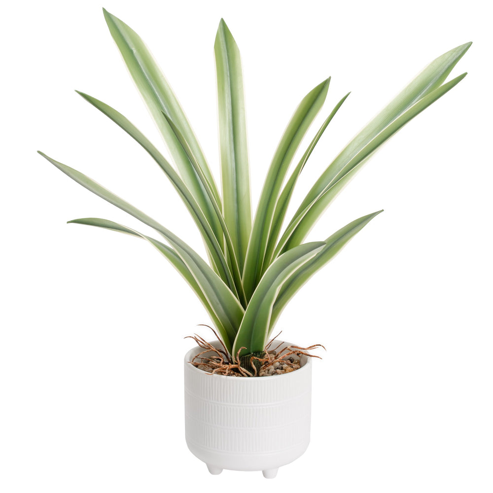 "Load image into Gallery viewer, 17"" Cymbidium Leaf Plant"
